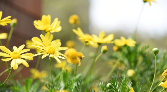 横浜でコスモスと秋バラを楽しむ~港の見える丘公園→山下公園~