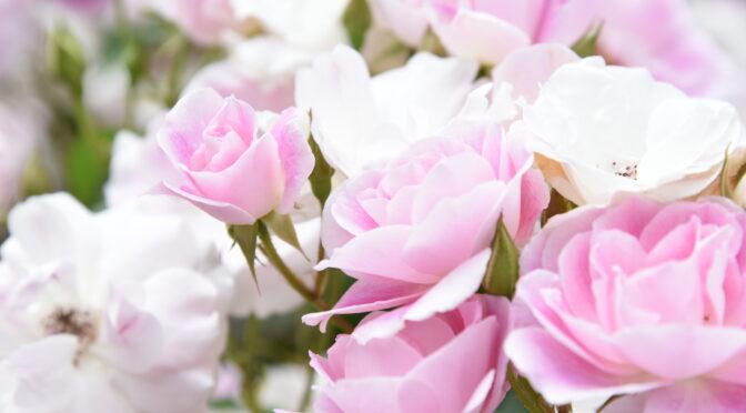 バラの最盛期!横浜イングリッシュガーデン「ローズフェスティバル」の見所をご紹介♪